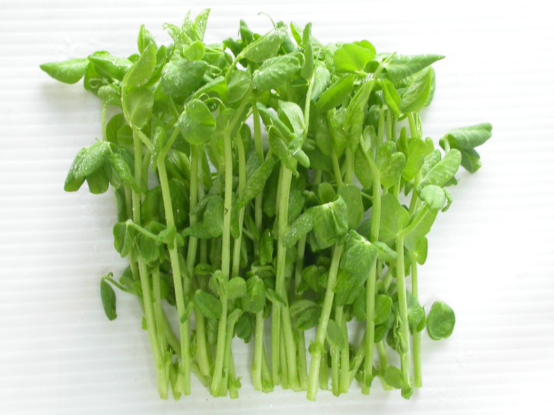 Sunland Seeds Snow Pea Sprouts