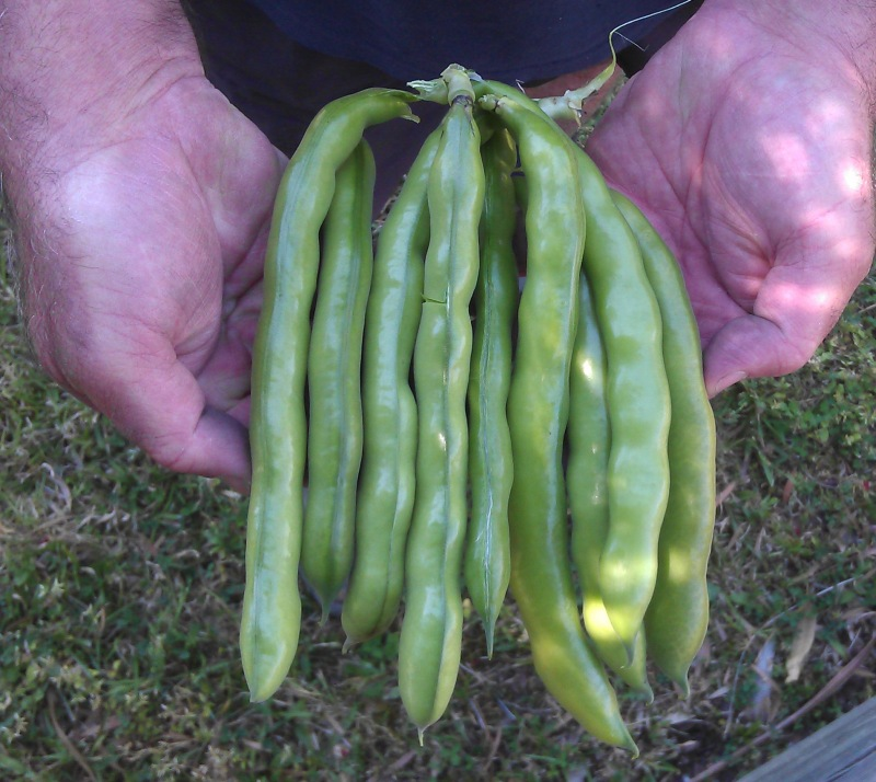 Sunland Seeds Tripoli